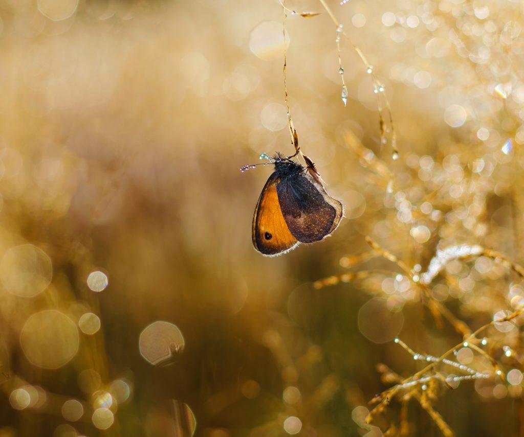 Farfalla: simbolo del mutamento - vediamo una farfalla posata su un piccolo ramo bagnato